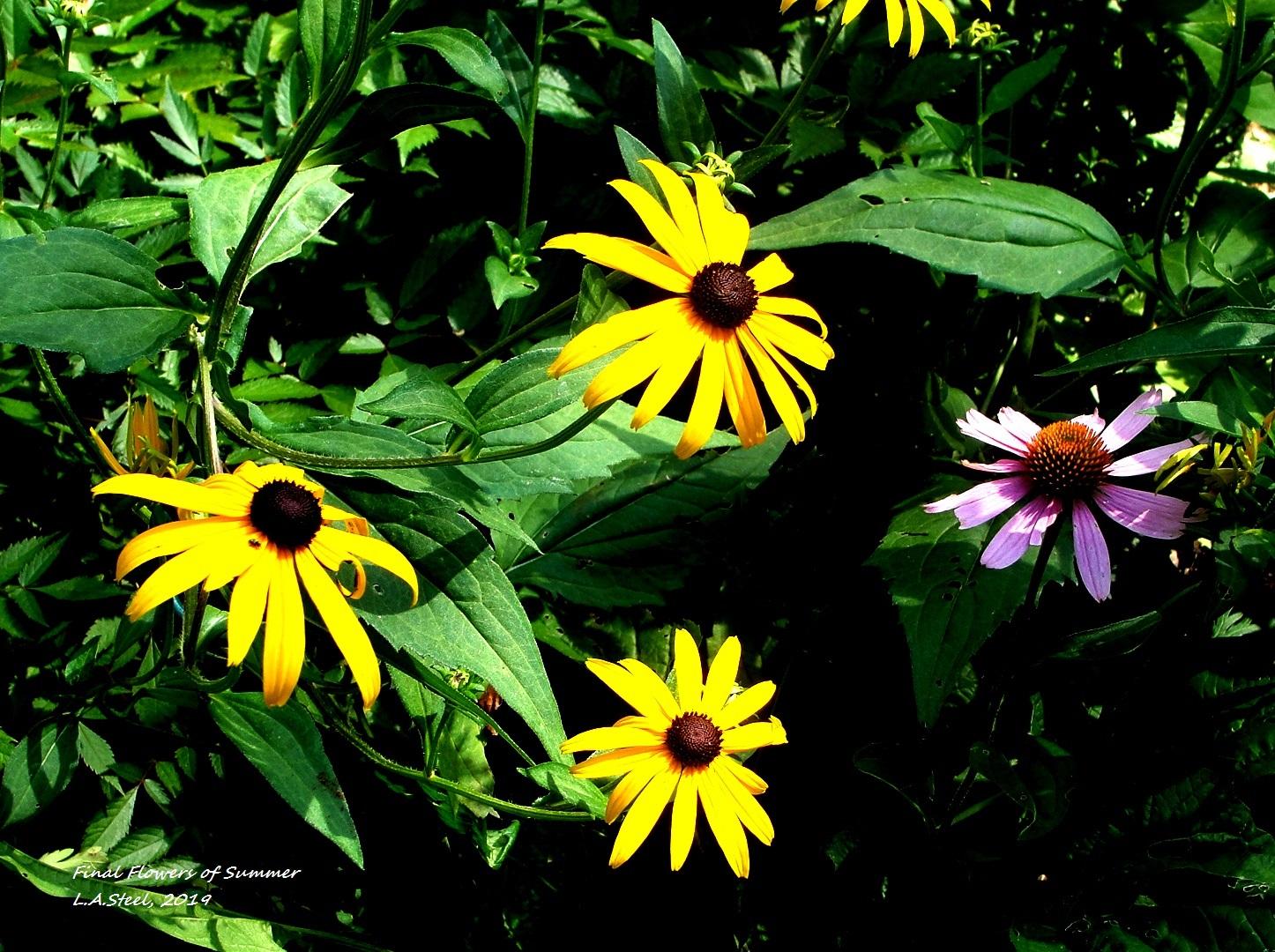 final flowers of summer 2019 5