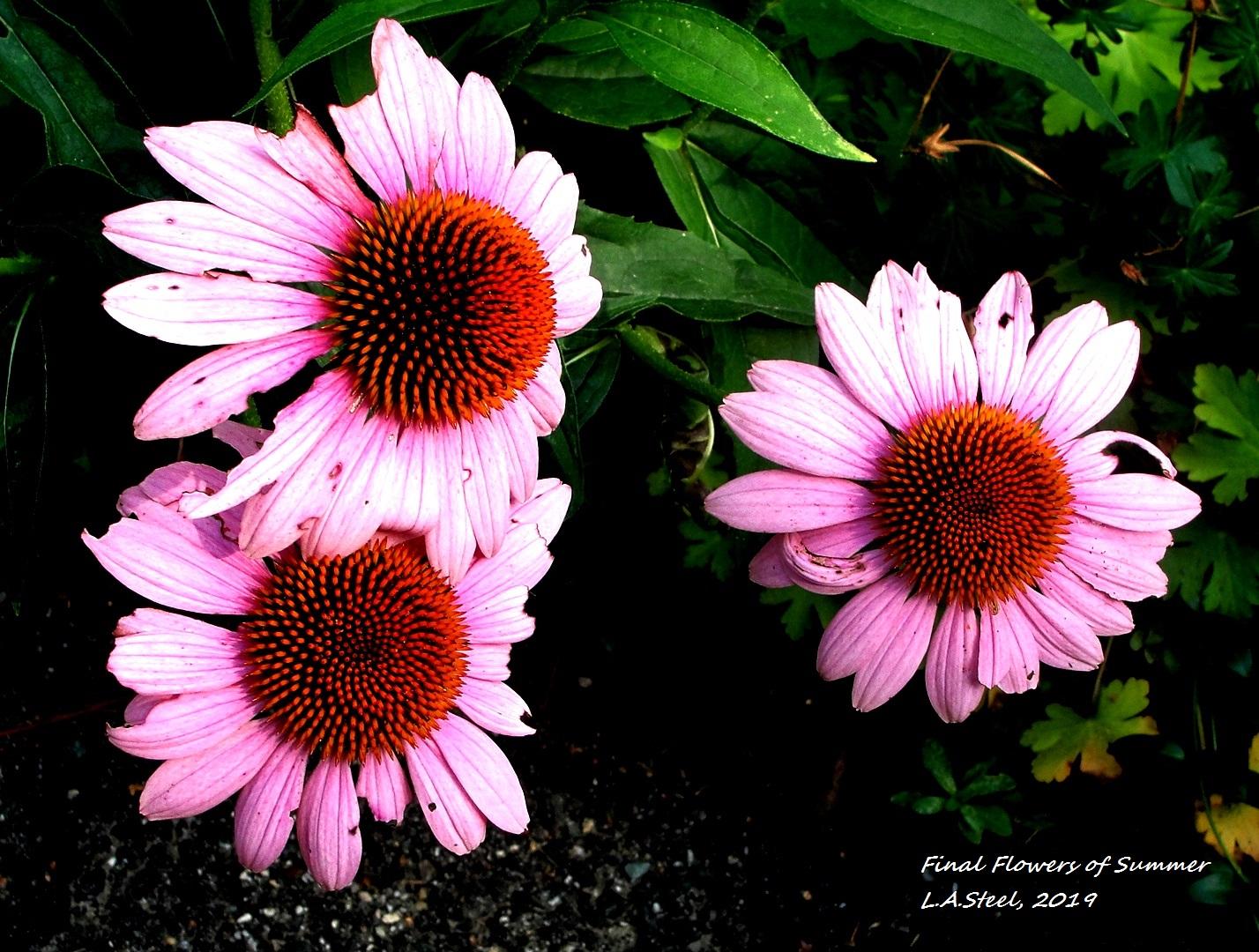final flowers of summer 2019