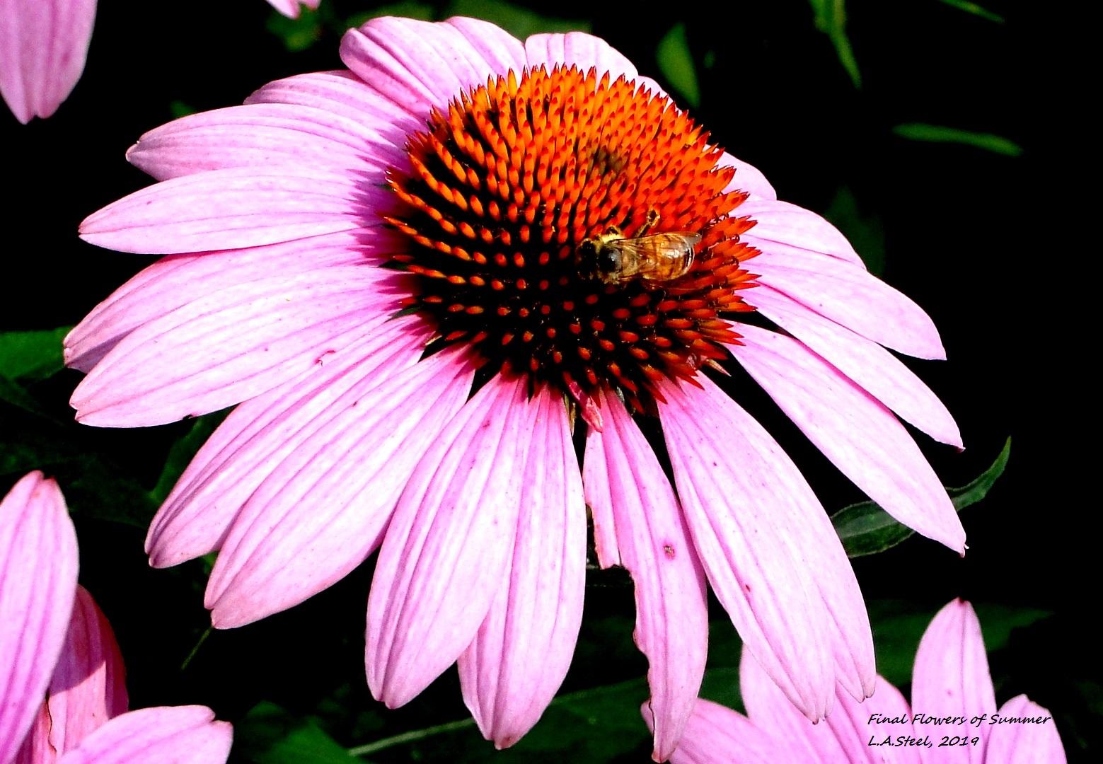 final flowers of summer 2019.jpg 2