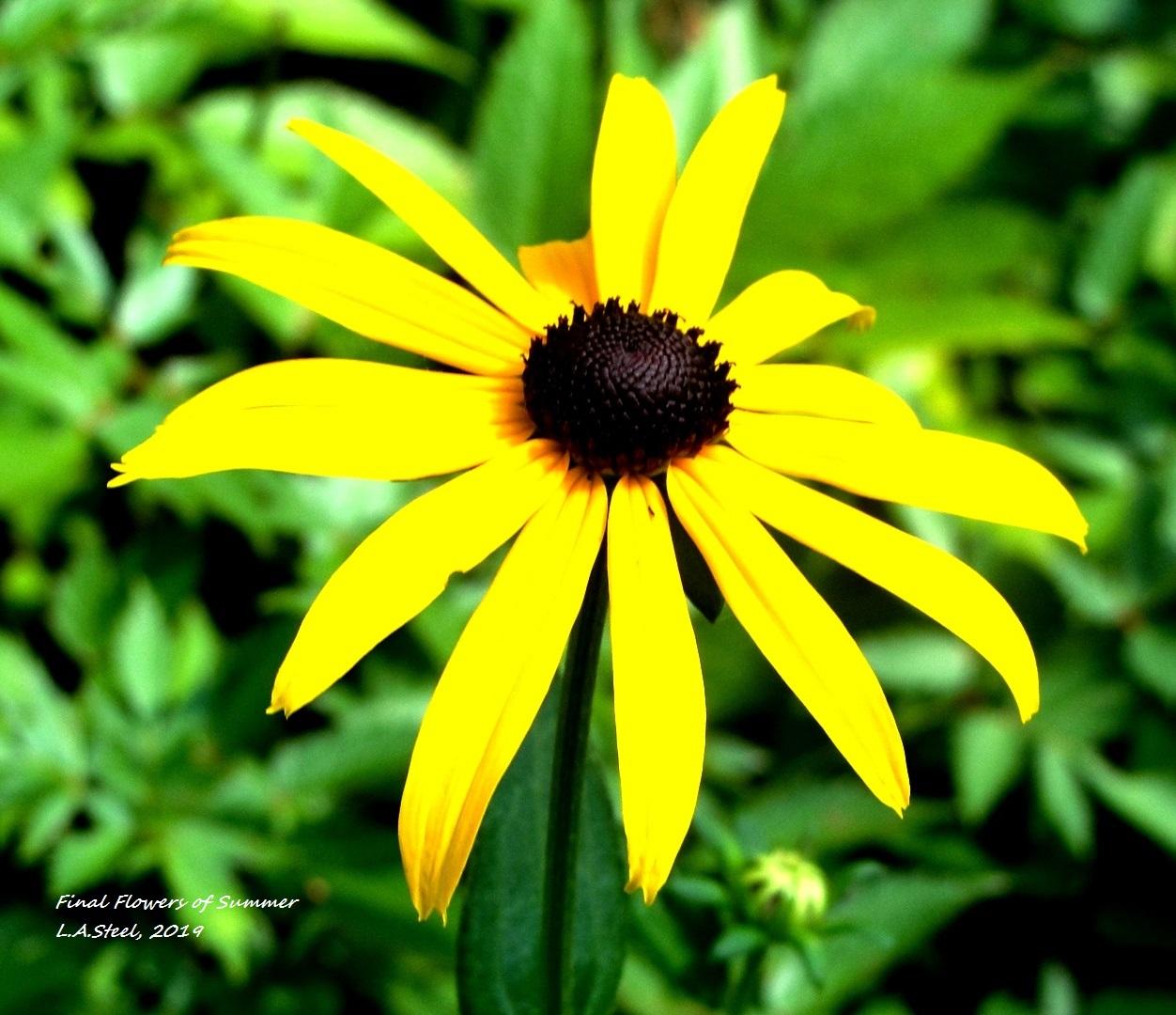 final flowers of summer 2019.jpg 6