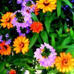flower fun 2019
