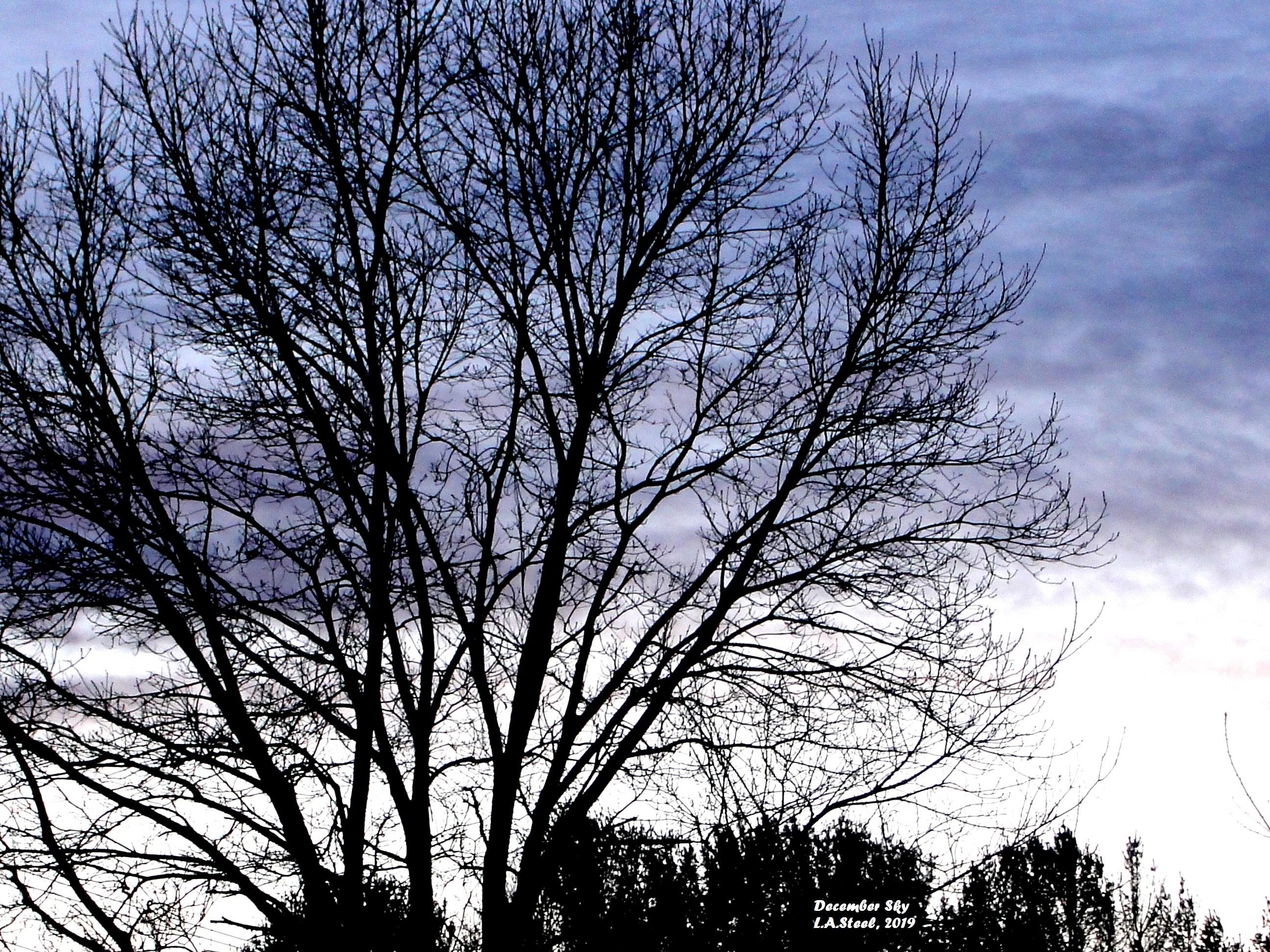 December sky 2019