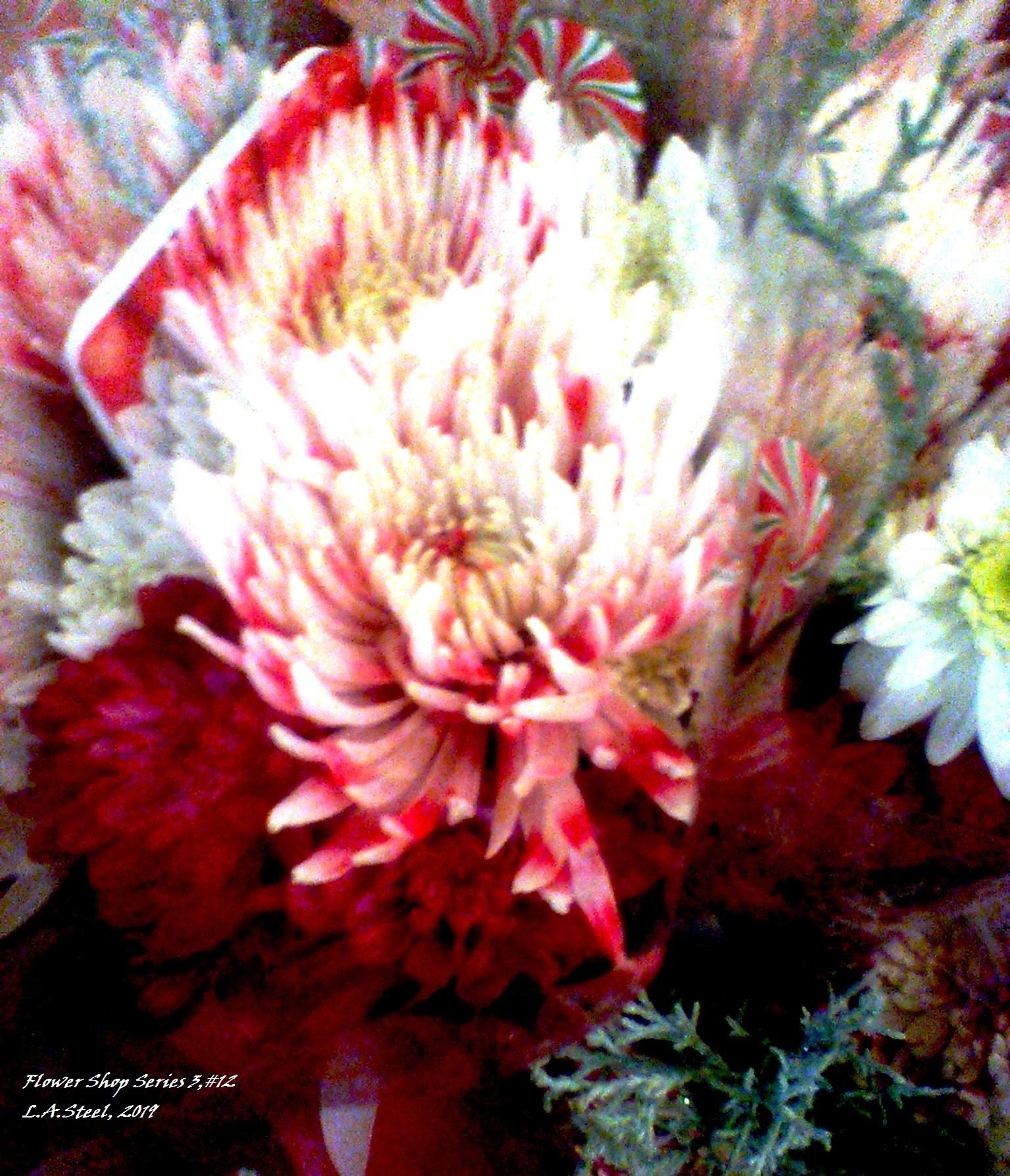 flower shop series 3 12 2019