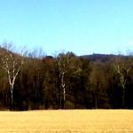 calvary field 2020