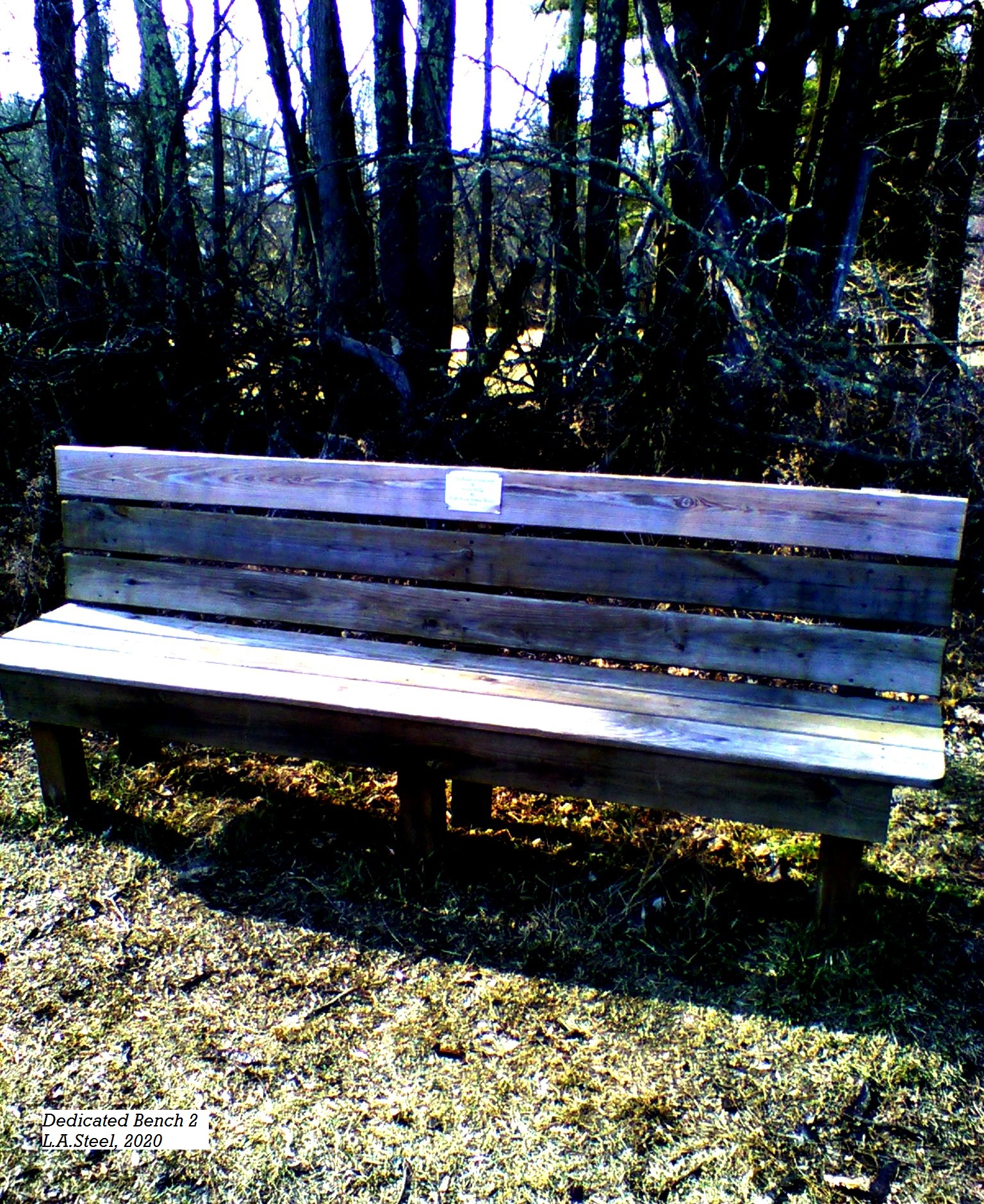 dedicated bench 2 2020