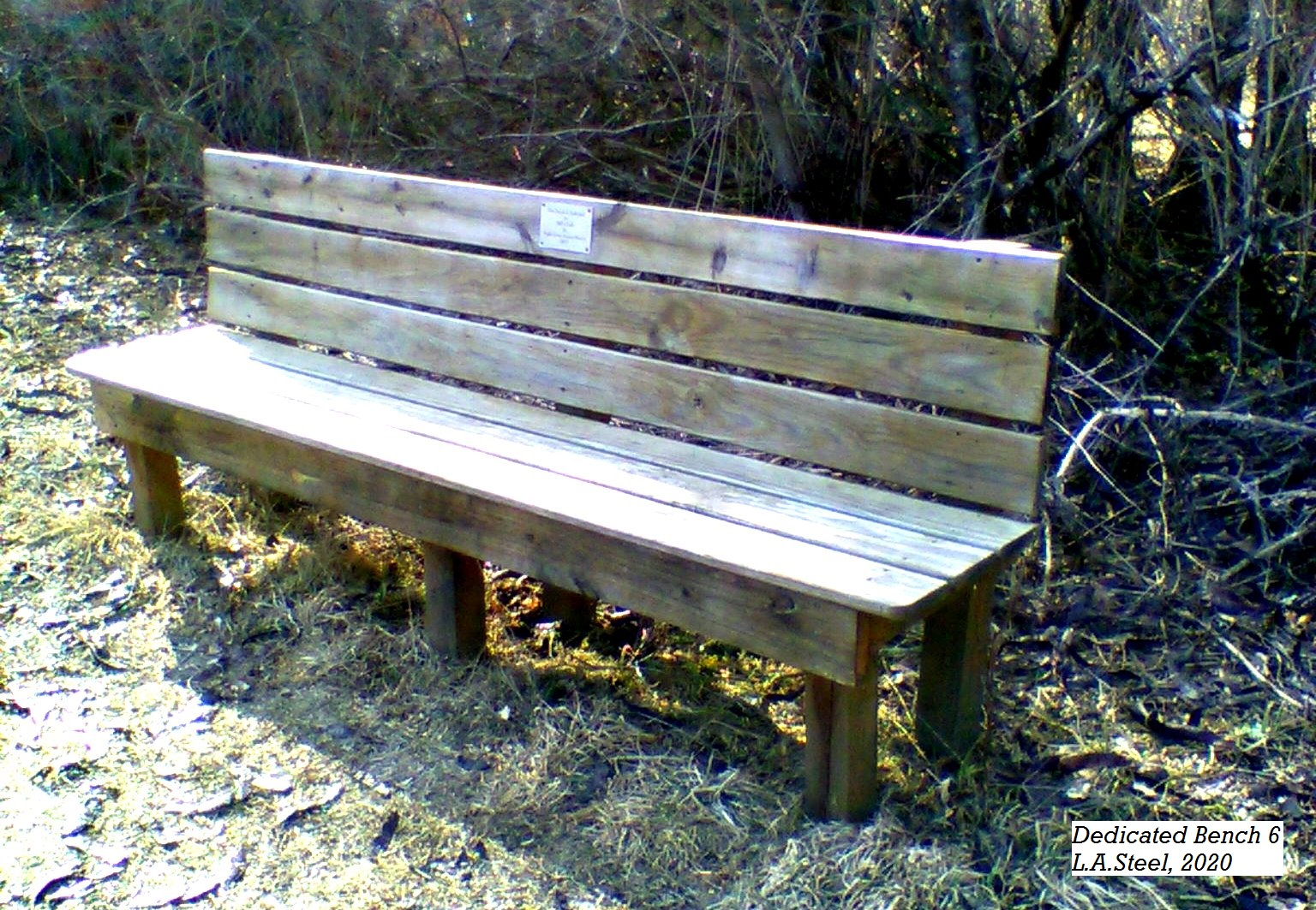 dedicated bench 6 2020