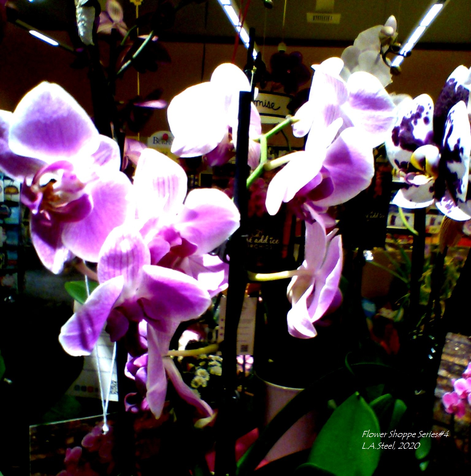 flower shoppe series 4 #6 2020