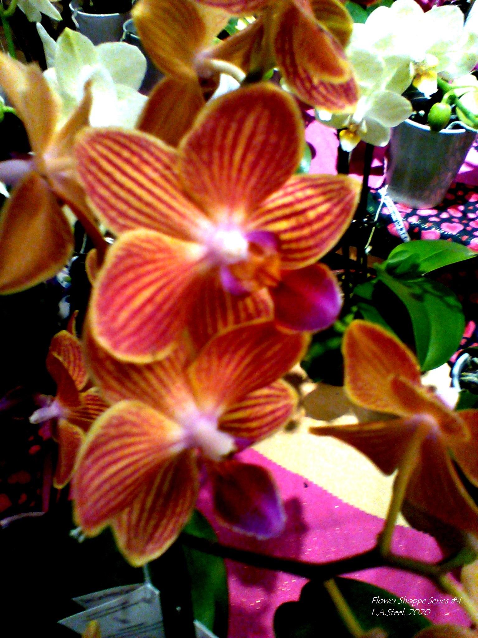 flower shoppe series 4 #8 2020