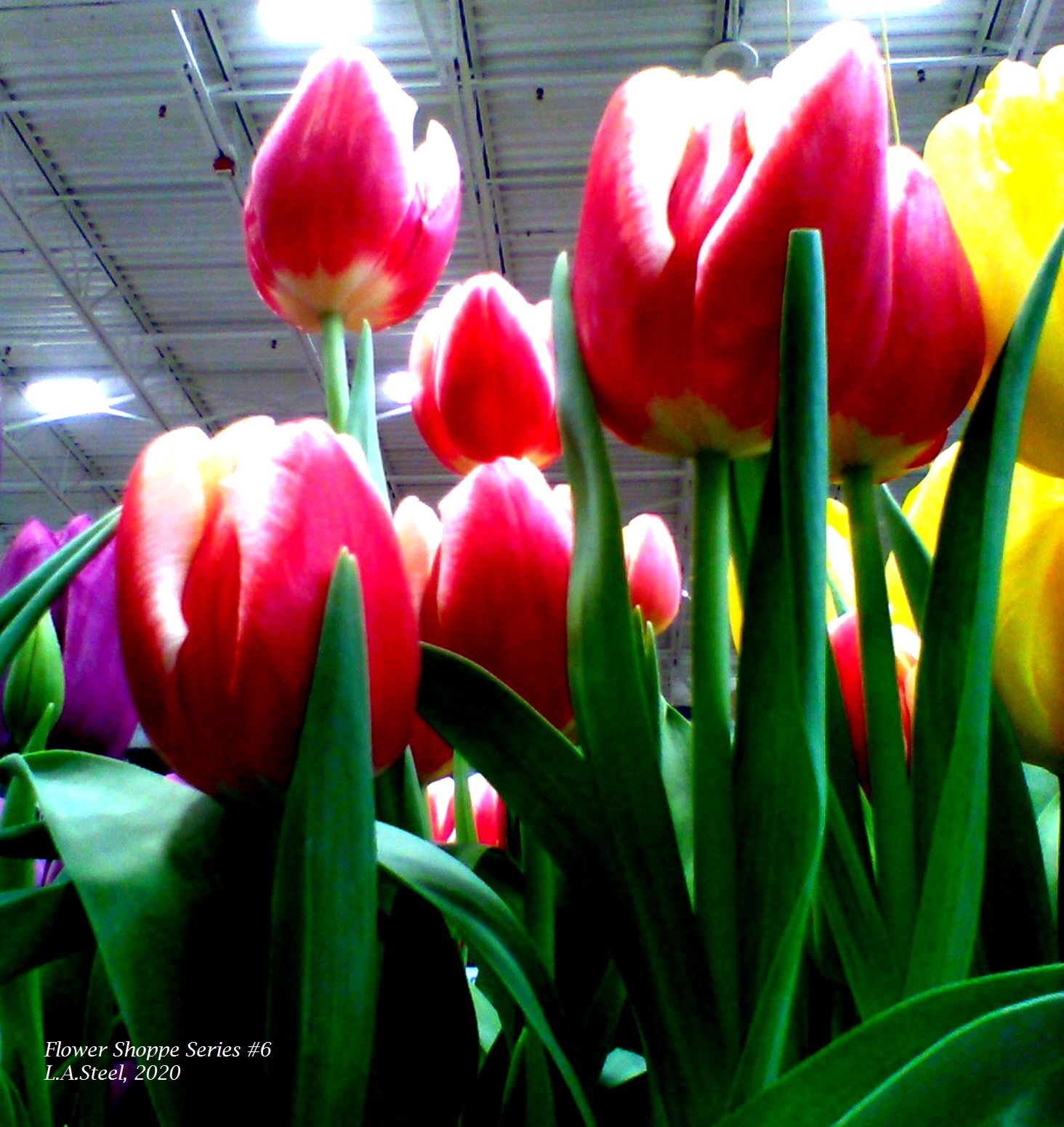 flower shoppe series #6 6 2020