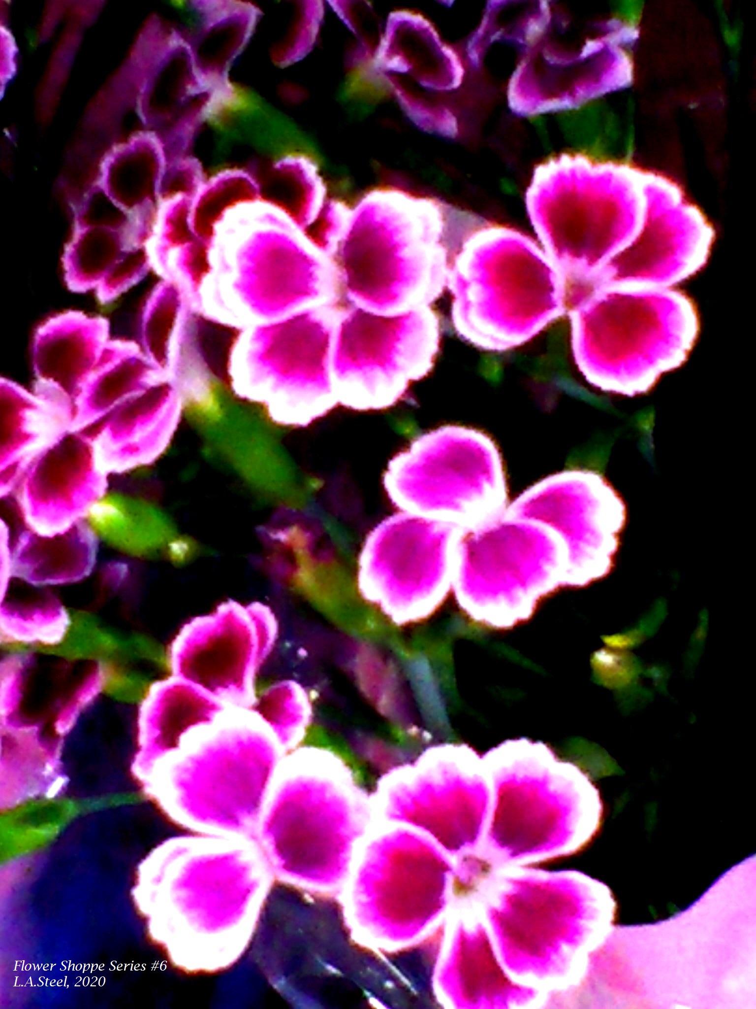 flower shoppe series #6 7 2020