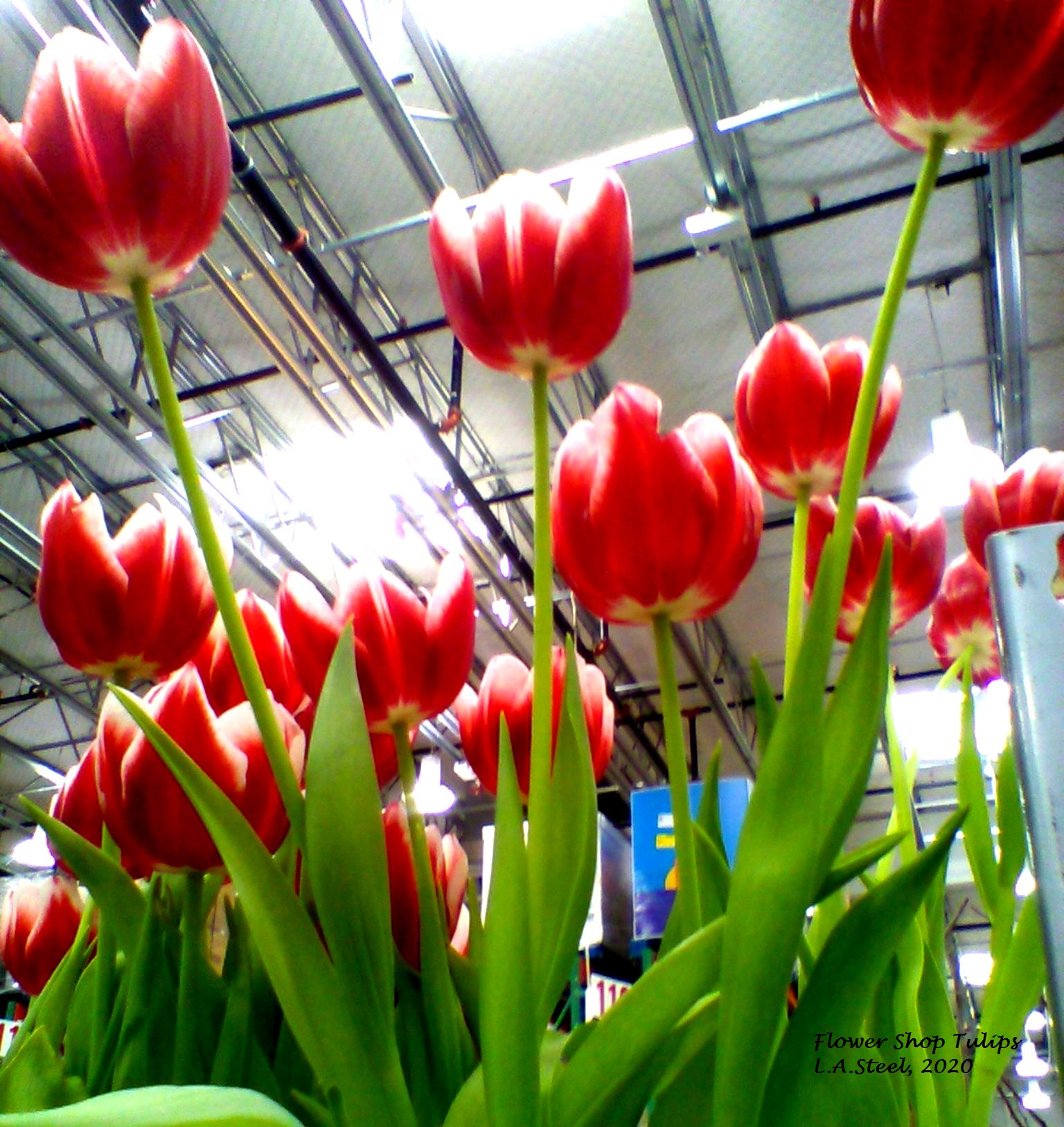 flower shop tulips 2 2020