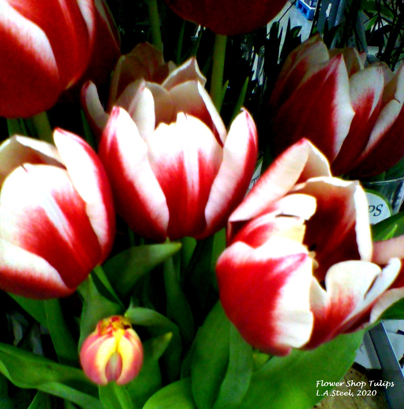 flower shop tulips 7 2020