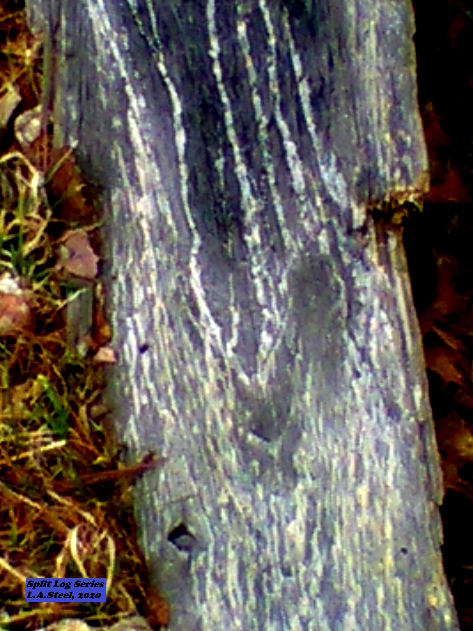 split log series 4 2020