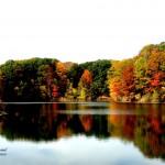 rainbow pond 2020