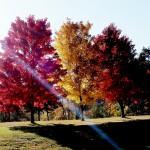 nwcorner series enhanced 3 trees 2016